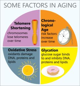 factors_in_aging